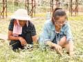 盛夏除草汗流浃背 苗木工人的高温生活