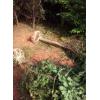 湿地松、马尾松、枫香】木荷、青钱柳、深山含笑、红叶石楠广玉兰