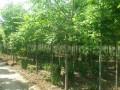 苗木种子贮藏的方法和注意含水量