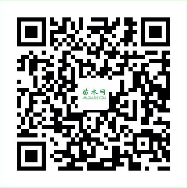 QQ图片20200909172543